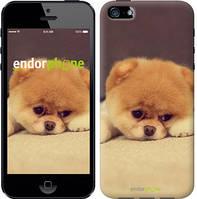 "Чехол на iPhone 5 Boo 2 ""890c-18-532"""