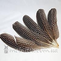 Перо цесарки серое в крапинку 17-22 см