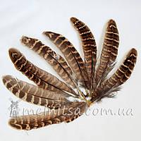 Перо фазана, коричневый 10-15 см