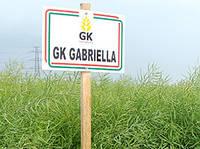 Озимый рапс сорт ГК Габриэлла 1 п.ед.(3 га). 270-280 дней. Зимостойкий высокоурожайный сорт 42-47ц/га. Венгрия