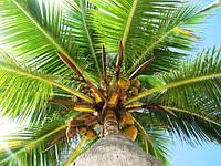 Остерегайтесь пальмового масла: его избегает каждый третий европеец