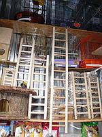 Лестница для попугая -1 метр. Дубовая, фото 1