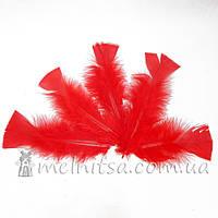 Перья индейки 12-18 см, красный (5 шт)