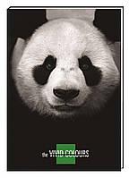 """Блокнот """"Vivid Colours"""" А5, 80 арк.,  картон с поролоном, клетка, """"панда"""""""