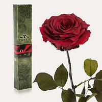 Долгосвежая роза Багровый Гранат в подарочной упаковке (не вянут от 6 месяцев до 5 лет) на коротком стебле