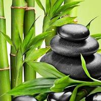 Косметические отдушки для мыла, свечей, косметики ручной работы Свежесть бамбука