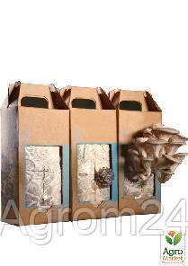 коробка грибница