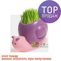 Травянчик с семенами Улитка / Оригинальные сувениры