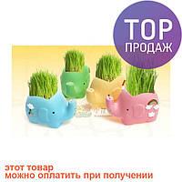 Травянчик с семенами Слон / Оригинальные сувениры