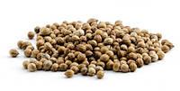 Кориандр 50 грамм, семена кориандра