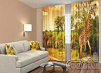 """ФотоШторы """"Жирафы"""" 2,5м*2,6м (2 полотна по 1,30м), тесьма, фото 1"""