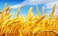 Уборка зерновых по Украине