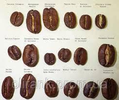 Види і сорти кави