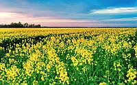 Уборка сои Украина