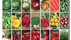 Отношение овощных растений к условиям внешней среды