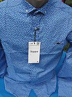 Мужская рубашка Lacoste голубая