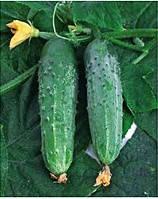 Семена огурца Зефир F1, 1 шт, Nasko (Наско), Молдавия