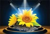 Купить семена подсолнечника Арена ПР