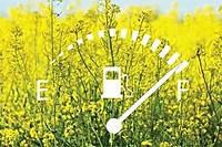 Семена рапса НК Петрол