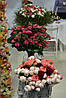 Flower Expo Ukraine 2017