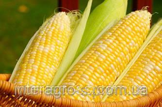 Купить Семена кукурузы PR39W45/ПР39В45