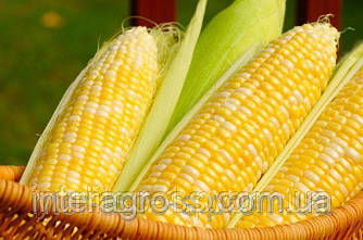 Семена кукурузы PR39W45/ПР39В45