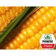 Купить Семена кукурузы П9400/ P9400