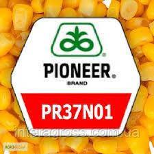 Купить Семена кукурузы ПР37Н01