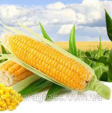 Семена кукурузы ПР38Н86