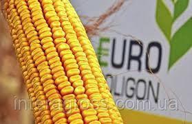 Купить Семена кукурузы ПР39Г12