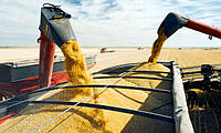 Итоги полугодия: самые крупные морские порты по перевалке зерна