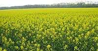 Лаваль, Seed Grain Company