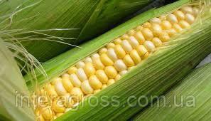 Купить Кукурудза Амелі