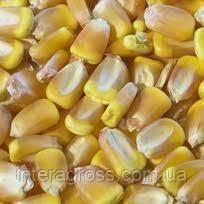 Купить Кукурудза ЄС Тріо