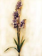 Цветы Орхидея фиолетовая