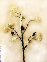 Цветы Яблоня белая