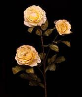Цветы Роза кремовая