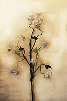 Цветы Яблоня сиреневая