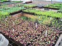 Отношение овощных растений к условиям внешней среды. Световой режим