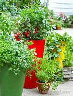 Отношение овощных растений к условиям внешней среды. Воздушное питание