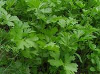 Ставлення овочевих рослин до умов зовнішнього середовища. Умови мінерального живлення