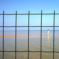 Сетка сварная рулонная Euro Fence  50*100 с ПВХ покрытием для заборов.