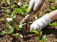 Система обработки почвы под овощные культуры. Послепосевная обработка