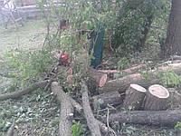 Рубка деревьев. Вырубка деревьев. Расчистка участка от деревьев. Уборка деревьев.
