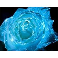 Краска светящаяся AcmeLight для цветов синяя