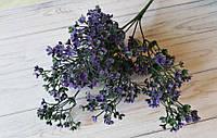 Трава кашка фиолетовая