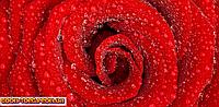 Панорамная картина Красная роза