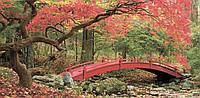 Панорамная картина Мостик в лесу