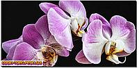Панорамная картина Орхидея фиолетовая