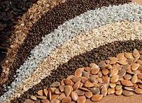 Семена и посев. Требования, предъявляемые к качеству посевного материала